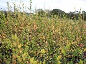 Plantes pépinière