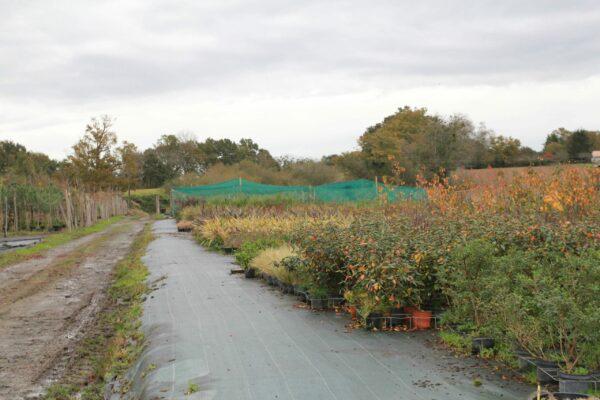 Chemin avec vue sur les plantes de la pépinière